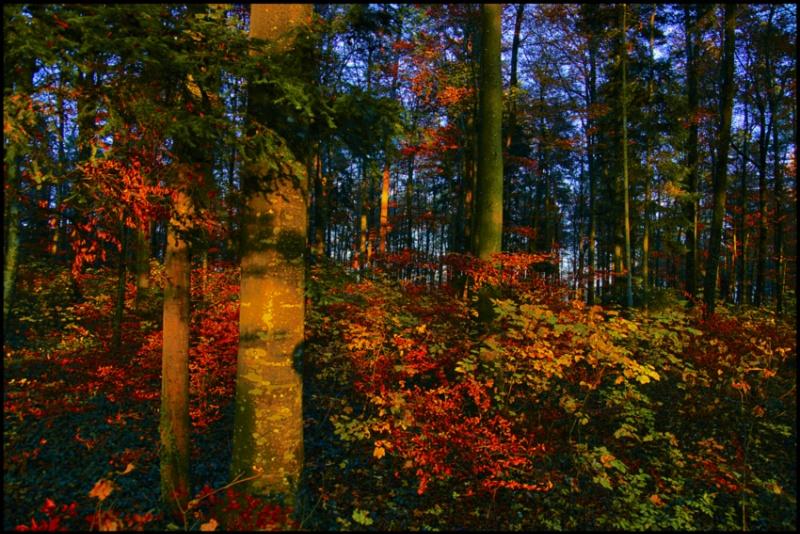 83.autumn