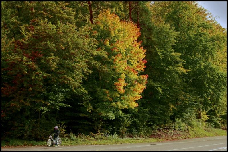 90.autumn